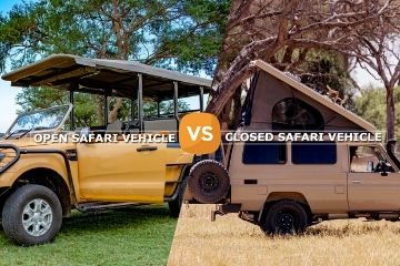 Are You Confused About What To Opt For Kenya Safari? Open or Closed Safari Vehicles!!!