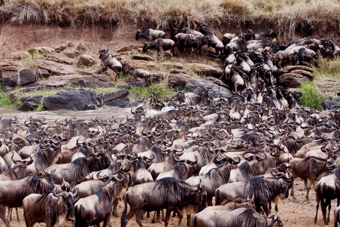 Massai Mara Migrations