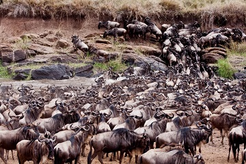 Best Things To Know Before Planning About Masai Mara Migration Safari