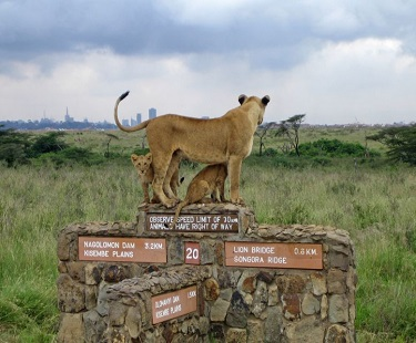 Heading Towards Kenya Safari, Which Can Be the Trip of Lifetime Experience