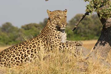 Startling Reasons for Choosing Kenya Safari for Your Next Vacation
