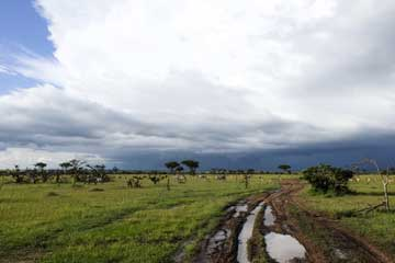 How To Plan Your Massai Mara Safari Within Affordable Package?