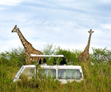 Kenya Safari Tours. Which One To Choose – Group Joining Safaris Or Private Safaris?