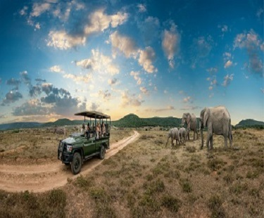 Kenya Safari Tours