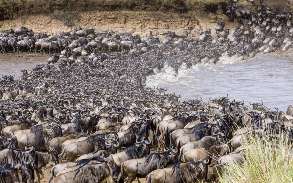 Where You Will Find The Best View Of The Great Migration?