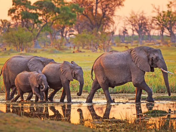 10 days Protect the Tuskers Elephants Safari