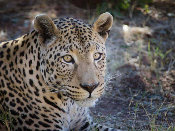 10 Days Wildlife Explorer