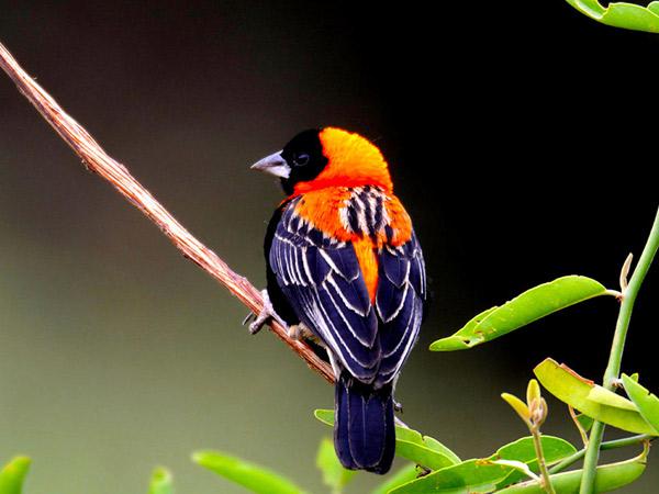 12 days Birdwatching Safari