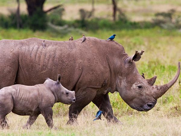 12 days Protect The Rhino Safari