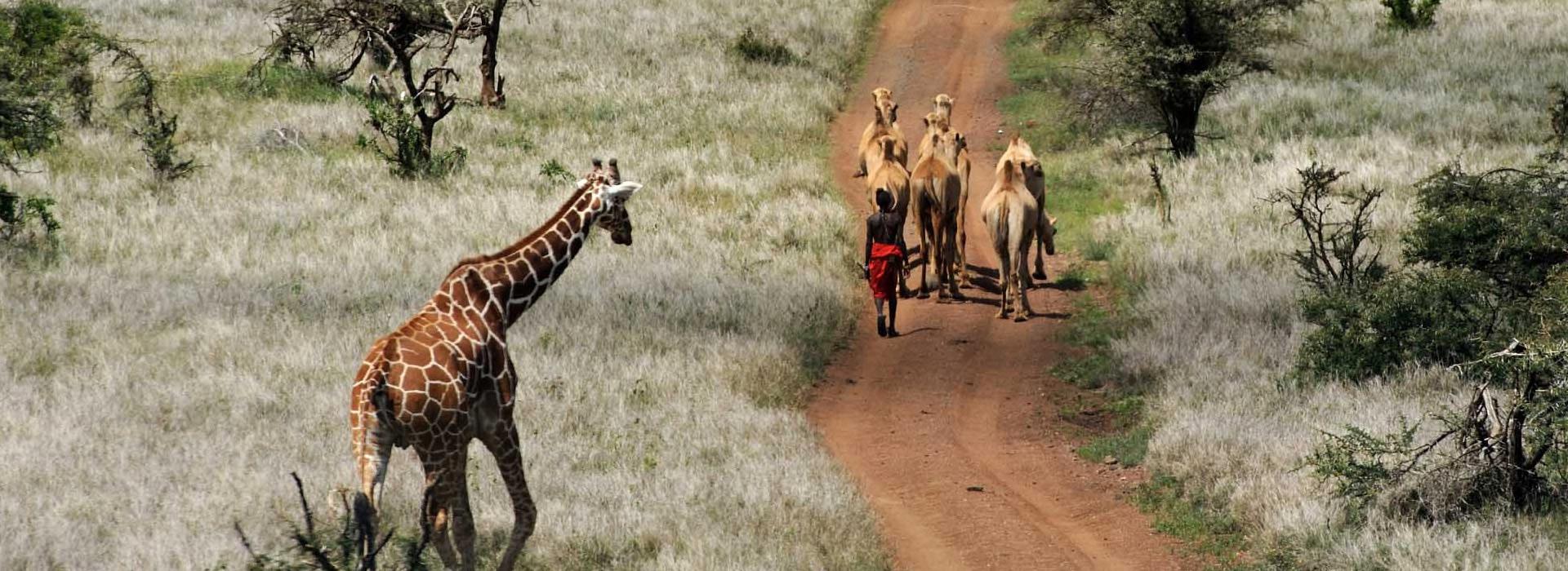 4 days Laikipia Safari flying package
