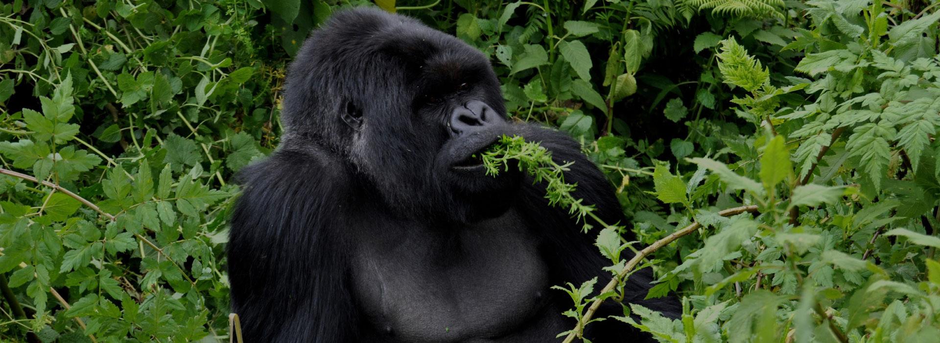 5 Days Kigali City tour gorilla trek