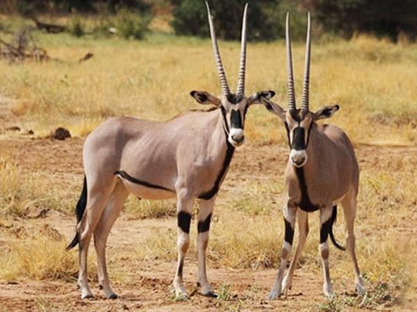 7 days Aberdare Samburu Nakuru Masai Mara