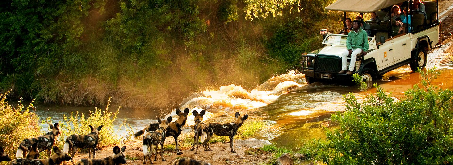 8 Days Scenic Wildlife safari