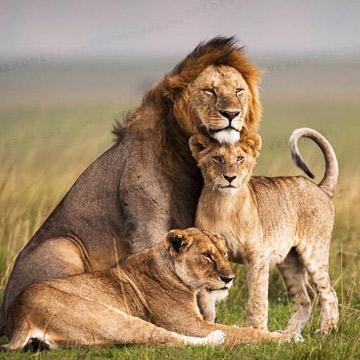 Kenya Excursions Safari