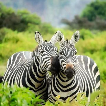 Kenya Weekend Safari