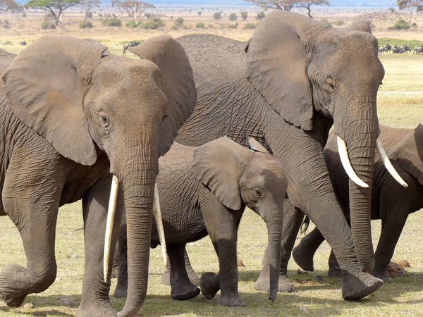 2 NIGHTS 3 DAYS TO AMBOSELI