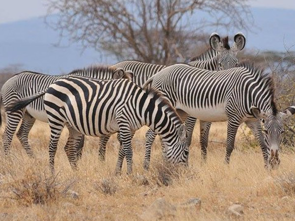 2 NIGHTS 3 DAYS TO SHABA/SAMBURU