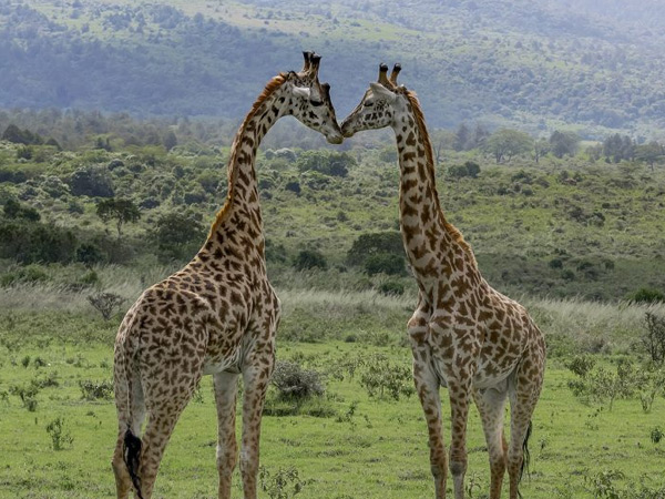 2 NIGHTS 3 DAYS TO MERU NATIONAL PARK