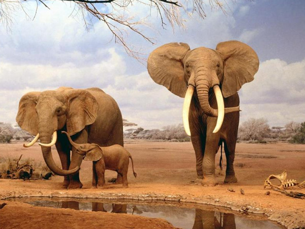 2 NIGHTS 3 DAYS TSAVO EAST/ NAIROBI
