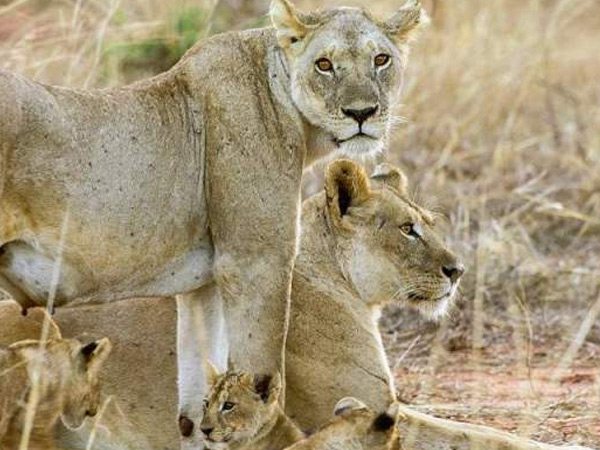 2 NIGHTS 3 DAYS TSAVO EAST/MOMBASA