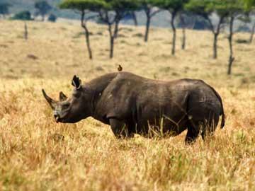 Amboseli Tsavo West Nairobi Safari