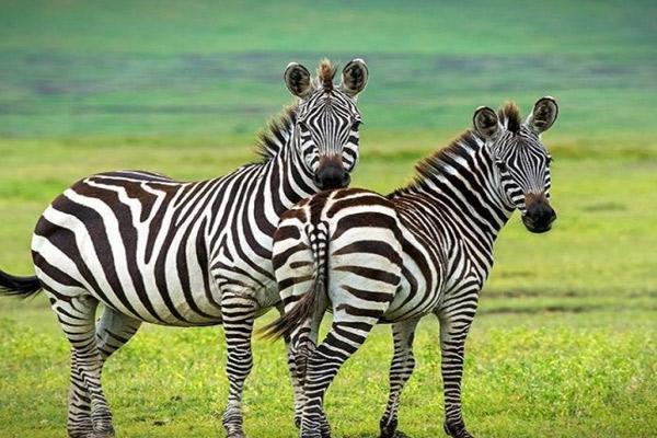 Kenya Tanzania Wildlife Safaris