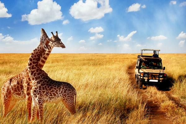 Kenya Tanzania Combined Lodge Safari