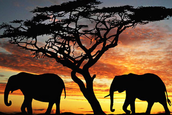 Fun Facts About Kenya Safari