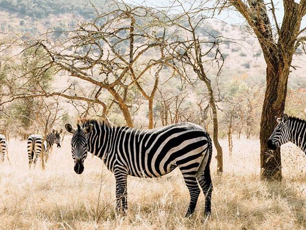 Tailormade Safaris