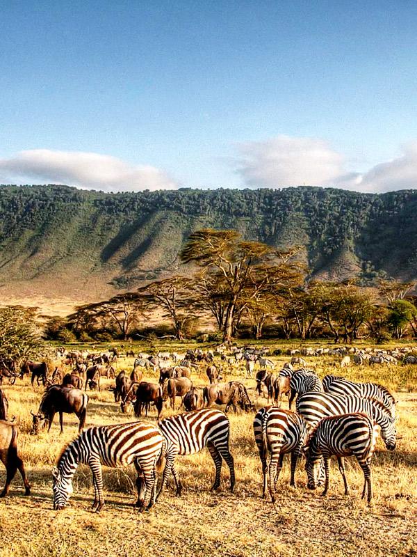 8 DAYS SCENIC TANZANIA SAFARI