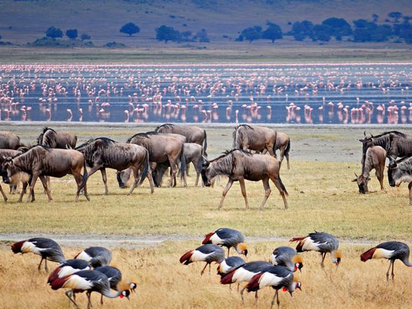 3 DAYS LAKE MANYARA AND NGORONGORO CRATER SAFARI